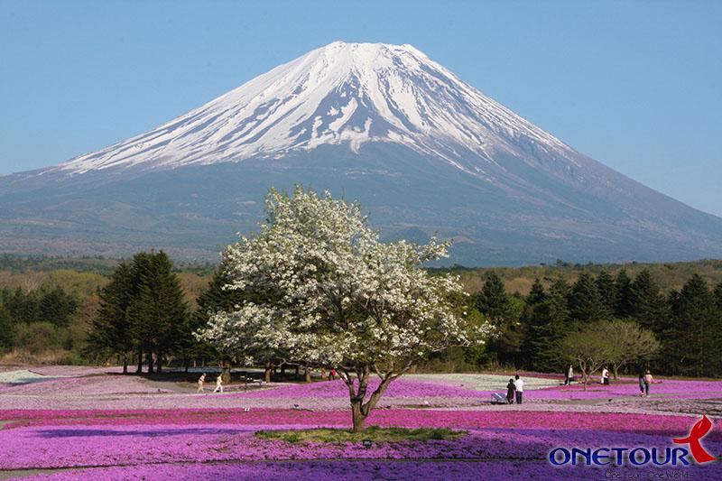 Ngày 04: Lake Kawaguchi - Fuji Mountain - Nagoya (Ăn sáng, trưa, tối)