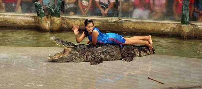 Ghé thăm Trại Hổ (Tiger zoo) xem các tiết mục biểu diễn như: xiếc hổ, xiếc voi, xiếc lợn... Cá sấu cũng là một trong những cư dân đông đúc tại Trại Hổ Sriracha Tiger Zoo Pattaya