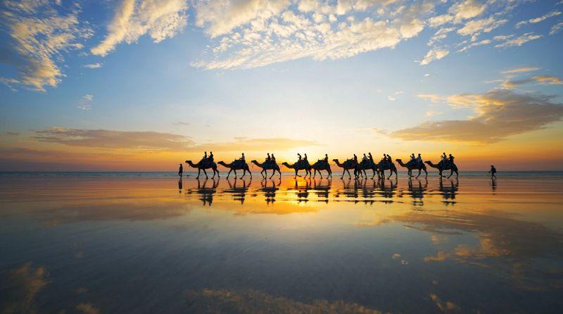 Thong dong trên lưng của những chú lạc đà trong ánh chiều buông tại Broome